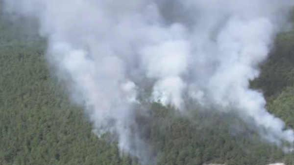 115 acres burn in NJ forest fire