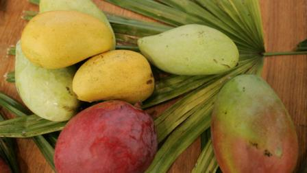 A variety of mangoes are displayed at the 14th annual International Mango Festival at Fairchild Tropical Gardens in Coral Gables, Fla. Saturday, July 8, 2006. There were about 200 varieties of the tropical fruit at the festival, which focused on the mangoes of Old Cuba. Last years mango season was the worst in South Florida in half a century due to hurricanes Katrina and Wilma. (AP Photo/Lynne Sladky)