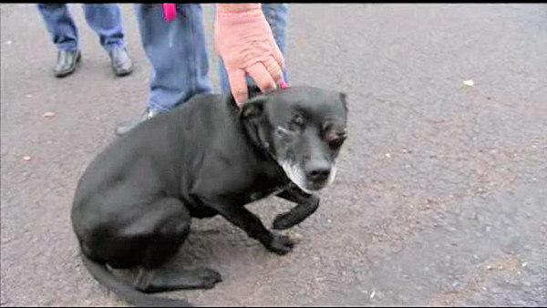 Dog recovers from severe head injury in Bucks County