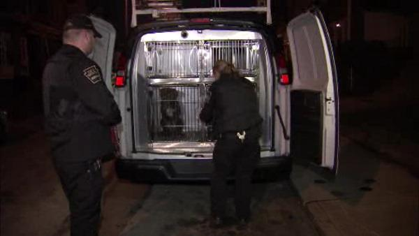 SPCA rescue dogs in suspected fighting ring in W. Phila.
