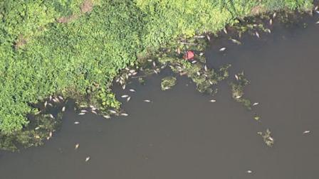 Hundreds of dead fish in Hirsch Lake in Runnemede