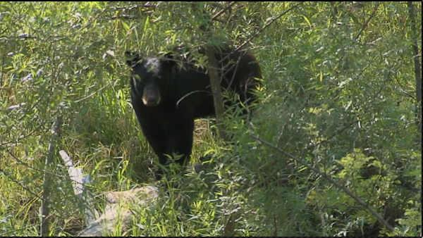 Black bear spotted in Warrington