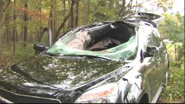 Driver killed when deer goes through windshield