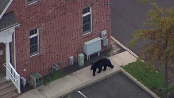 Bear still loose in Burlington County