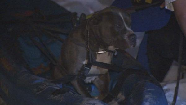 Stranded dog rescued from icy Delaware River