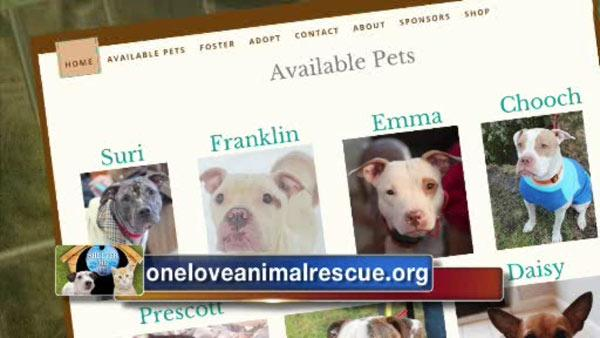 Shelter Me: One Love Animal Rescue