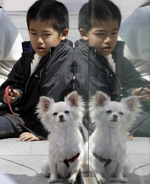 "<div class=""meta ""><span class=""caption-text "">Kenshin Nakajima, 7, evacuated from Minamisoma, Fukushima Prefecture, northeastern Japan, where the troubled Fukushima Dai-ichi nuclear power plant is located, takes time with his dog at an evacuation center in Saitama, near Tokyo, Monday, March 28, 2011. The March 11 earthquake off Japan's northeast coast triggered a tsunami that barreled onshore and disabled the Fukushima nuclear plant.  (AP Photo/Lee Jin-man)</span></div>"