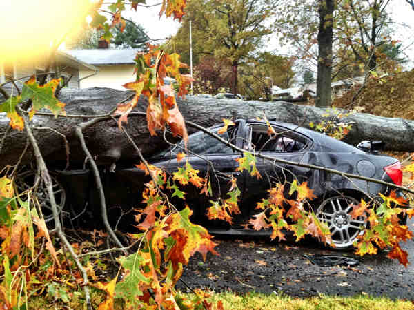 "<div class=""meta image-caption""><div class=""origin-logo origin-image ""><span></span></div><span class=""caption-text"">Strong winds brought down several massive trees on Tall Pine Lane in Levittown, Bucks County.</span></div>"