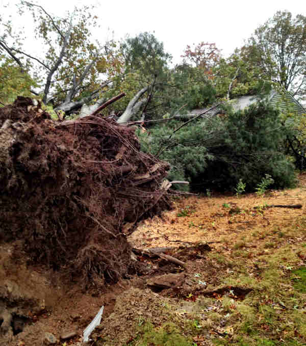 "<div class=""meta ""><span class=""caption-text "">Strong winds brought down several massive trees on Tall Pine Lane in Levittown, Bucks County.</span></div>"