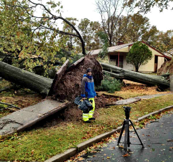 Strong winds brought down several massive trees on Tall Pine Lane in Levittown, Bucks County.