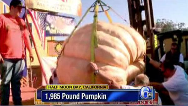 Giant 1-ton pumpkin wins big