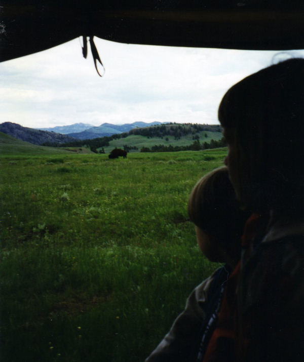 A buffalo, as seen from inside one of the covered wagons that take you to a cowboy cook-out.  This excursion is inside Yellowstone and can be booked online in advance, when making your hotel reservation.  We also saw coyotes on this trail.