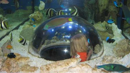 David Murphy reviews the new KidZone at Adventure Aquarium.