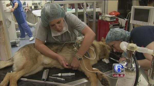 Innovative surgery saves dog's life