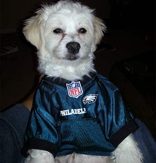 "<div class=""meta ""><span class=""caption-text "">Bennie is all Eagles Up! (Eagles Fan Photos - 2013 Playoffs)</span></div>"
