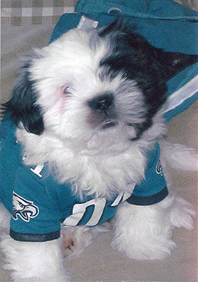 "<div class=""meta ""><span class=""caption-text "">Dio is a furry EAGLES fan (Eagles Fan Photos - 2013 Playoffs)</span></div>"