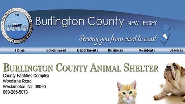 Shelter Me: Burlington County Animal Shelter