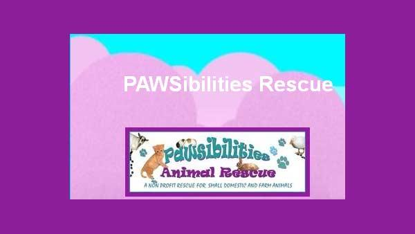 Shelter Me: PAWSibilities Animal Rescue