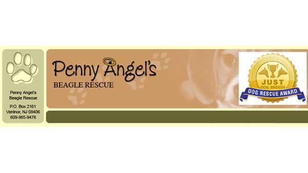 Shelter Me: Penny's Angels Beagle Rescue