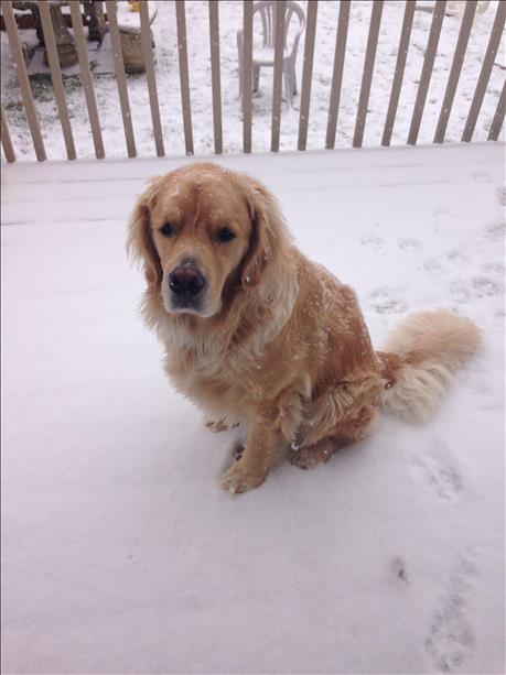 """Buddy"" the dog loves the snow so much, he refused to come inside!"