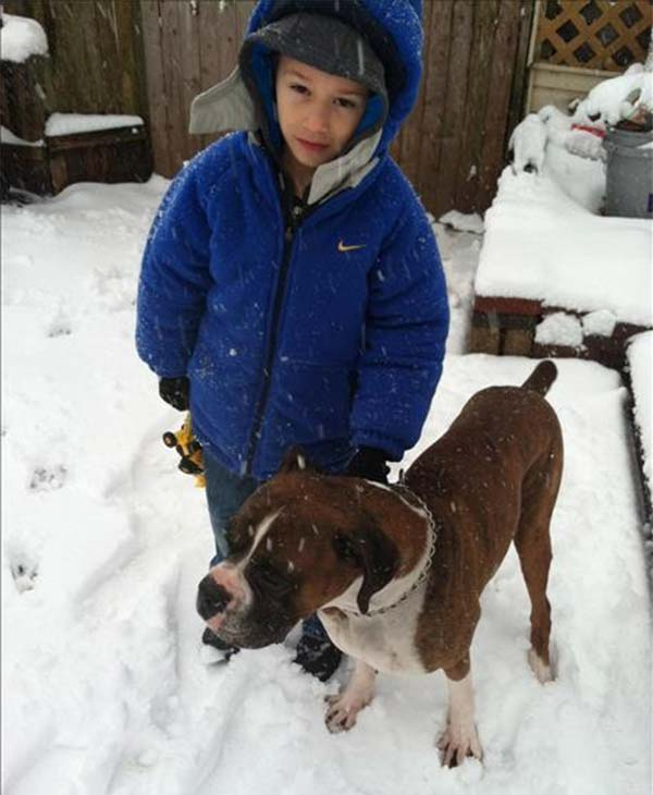 Antonio and Kujo playing in the snow in Pottstown.