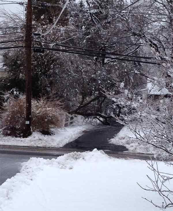 "<div class=""meta ""><span class=""caption-text "">A tree down on a driveway in Collegeville, Pa.  (From Liz L.)</span></div>"
