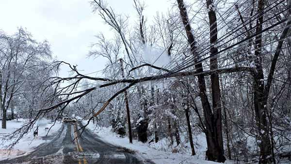 "<div class=""meta ""><span class=""caption-text "">Tree down on wires in Doylestown, Pa.  (From Matt H.)</span></div>"