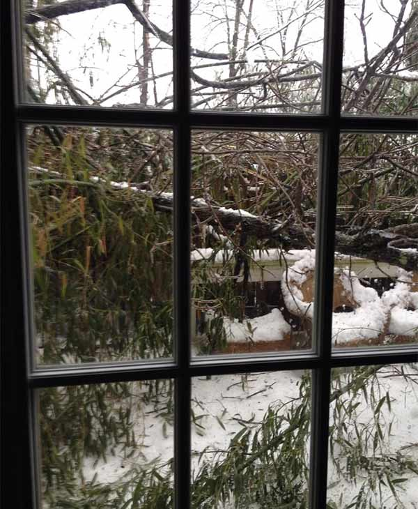 Big tree branch down on a deck in New Hope. (From Leah Ingram)