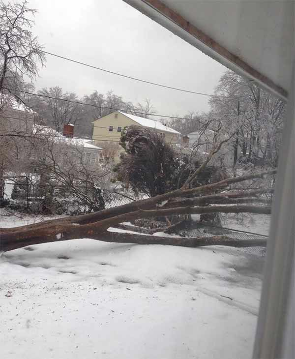 Tree down in a Wilmington backyard.  From  Nicholas Liberatore on Twitter.