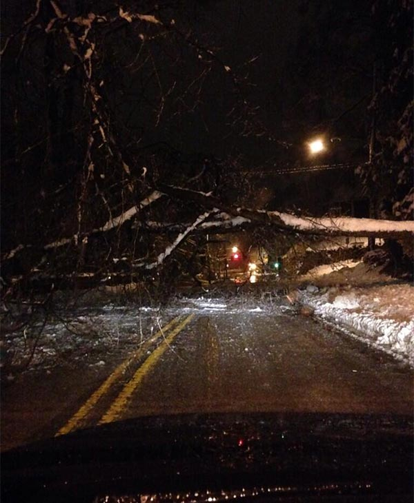Tree down in Glenside near the Jenkintown train station