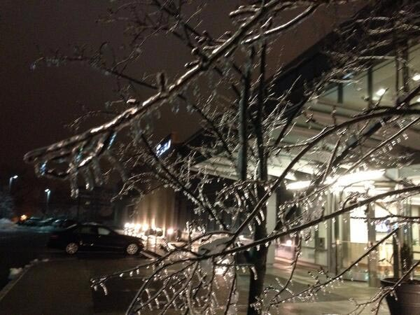 Ice weighing down tree branches outside 6abc studios.