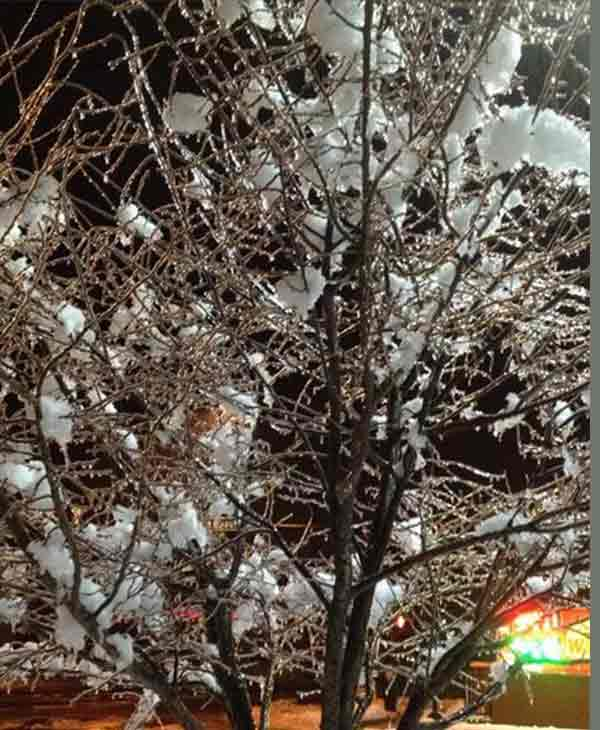 Ice and snow on Pottstown tree