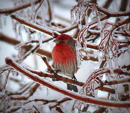 An Action News viewer sent in this photo of a bird waiting the storm out as ice accumulated all around.
