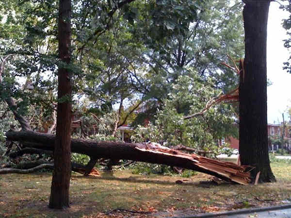 An Action News viewer submitted this photo of a downed tree on Bancroft Parkway in Wilmington.