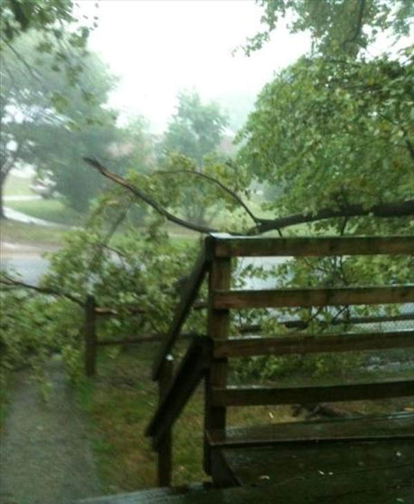 Caption: This is in front of our home on Jackson Ave in Claymont, DE. The whole tree has to come down.  - Jennifer Lester