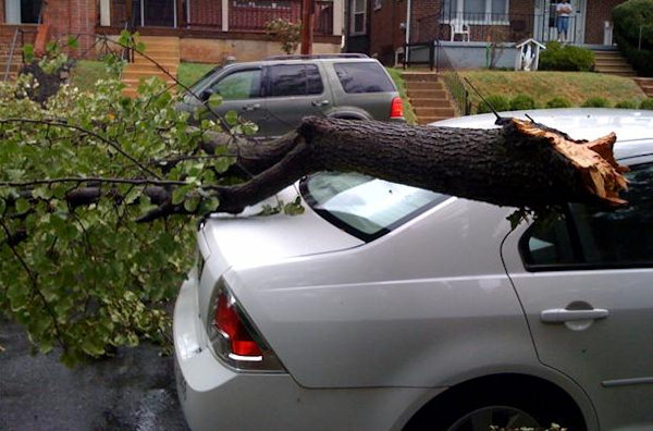 An Action News viewer sent in this picture of a tree branch on a car at Rodney Street at 8th Street in Wilmington.