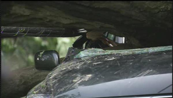 Tree falls on car with family inside