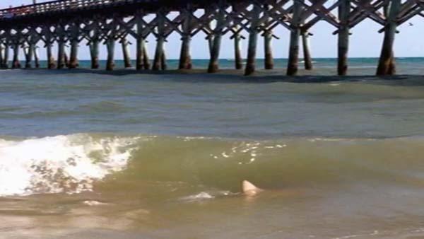 Topsail Island Shark Attacks