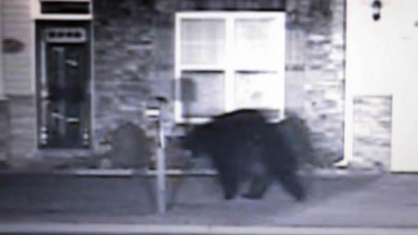 Bear spotted in Hope Mills