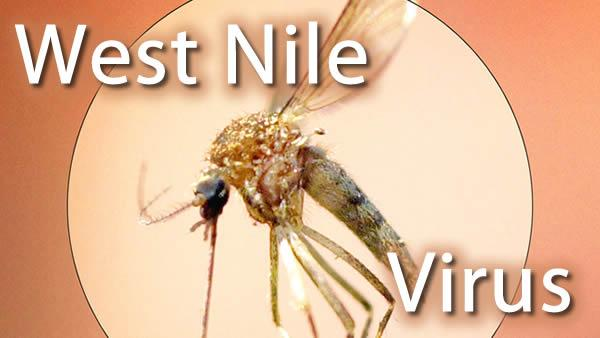 5 West Nile cases reported in NC
