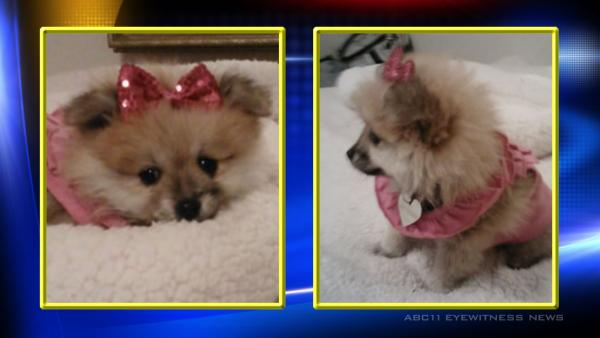 Service dog stolen in Goldsboro