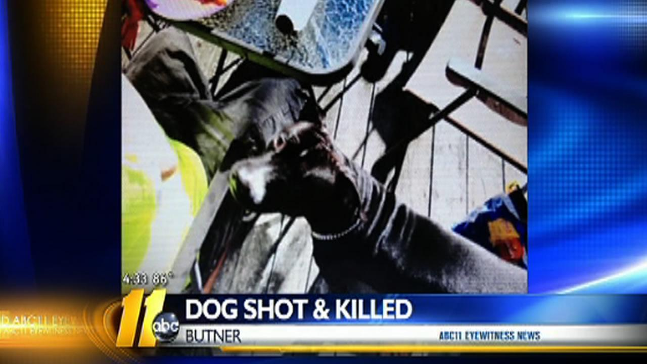 Dixon said the dog, named Buddy, didnt have to be killed