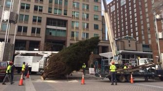 The 40-foot tree arrives for Ipreo Raleigh Winterfest.