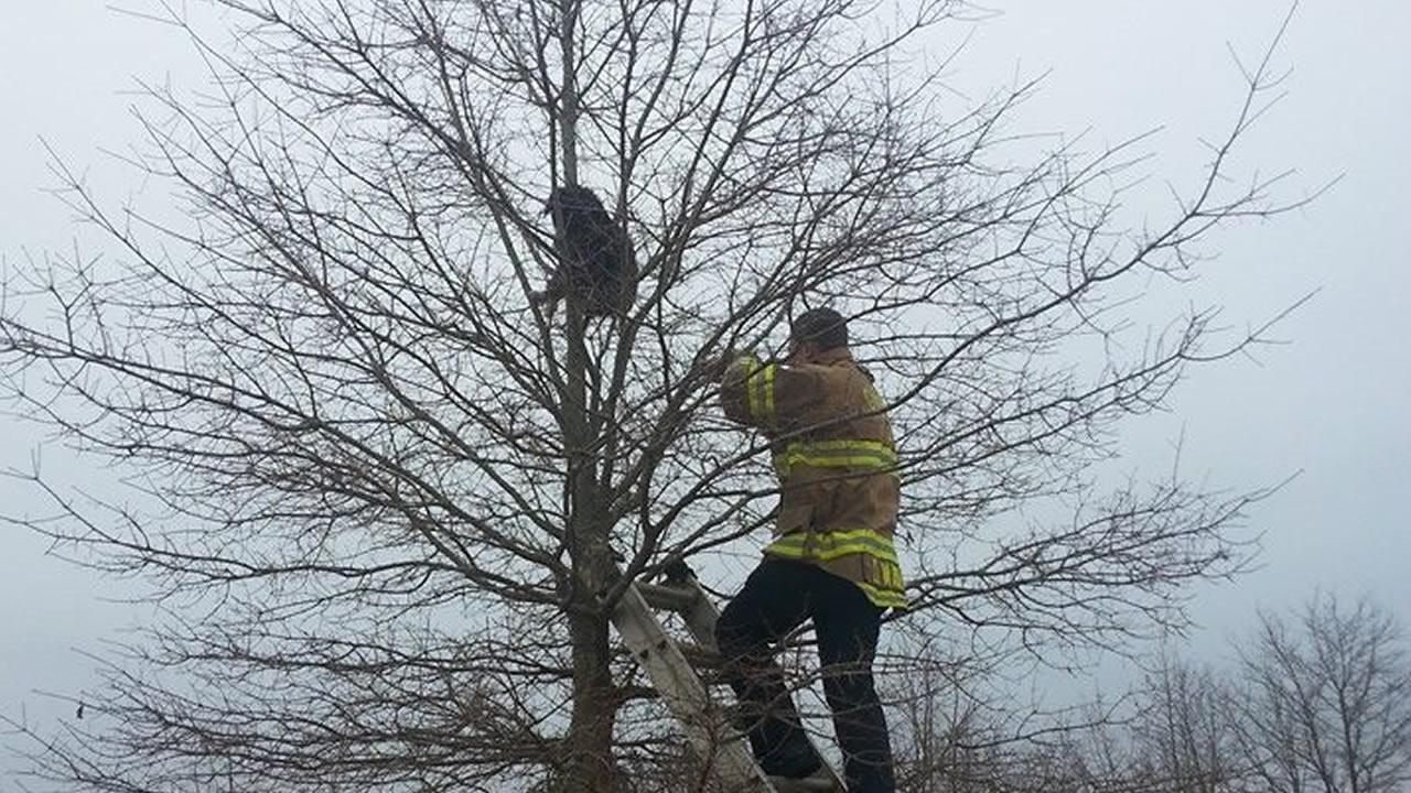 An ABC11 viewer says the Garner Fire Department came to the rescue when their dog got stuck in a tree.