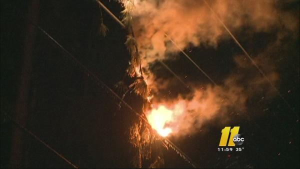 Tree catches fire after falling on power line