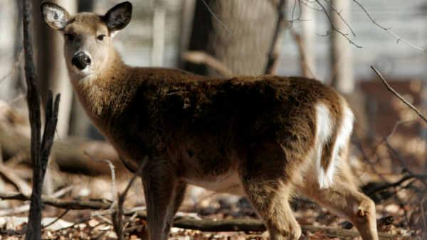 Durham Council approves deer bow hunting