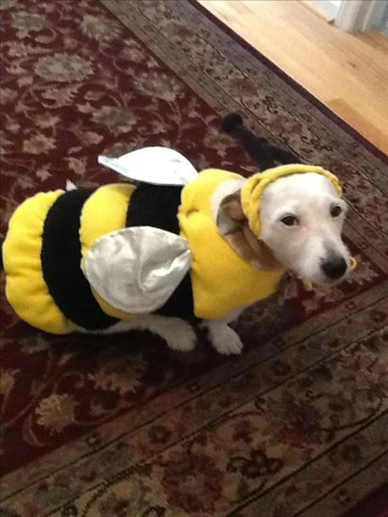"<div class=""meta image-caption""><div class=""origin-logo origin-image ""><span></span></div><span class=""caption-text"">ABC11 viewers sent in pictures of their pets dressed in Halloween costumes (Photo/iWitness Photos)</span></div>"