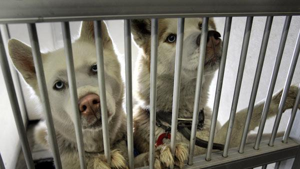 Animal shelter stops controversial euthanization practice