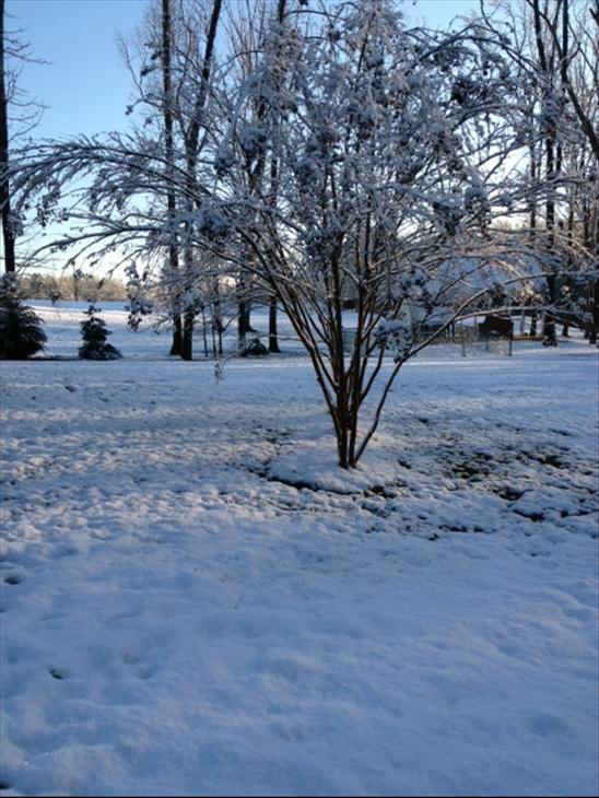 January snow photo from ABC11 viewer  <span class=meta>(Photo&#47;uReport user submitted image)</span>