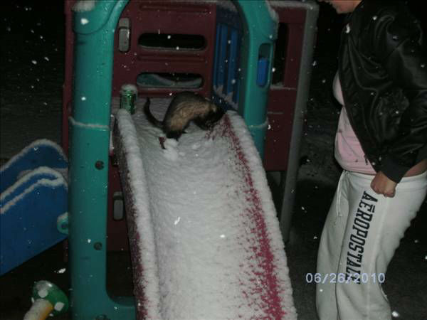 "<div class=""meta image-caption""><div class=""origin-logo origin-image ""><span></span></div><span class=""caption-text"">Snow ferret? (WTVD Photo/ uReport viewer submitted image)</span></div>"